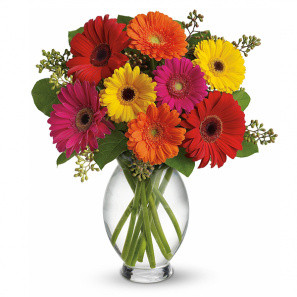 Gerbera Brights buy at Fleur Quebec